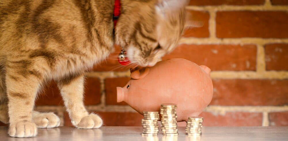 Cat sniffing a piggy bank