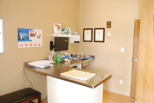 Examination counter in room at muskoka animal hospital